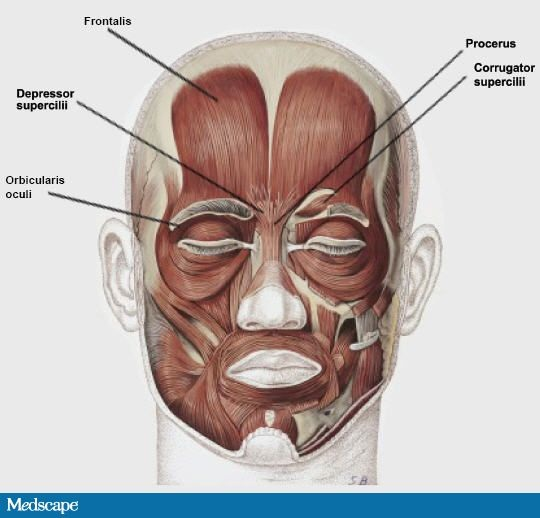 The Orbicularis Oculi - Why Do Humans Cry?